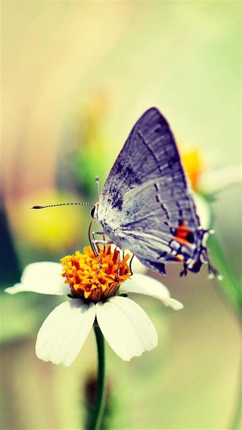 wallpaper iphone 6 butterfly free butterfly iphone x hd background