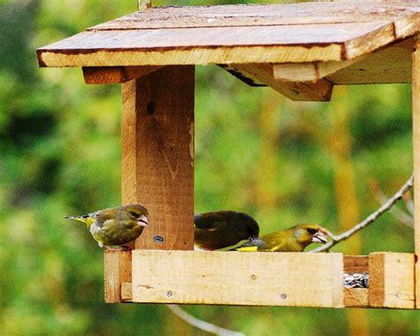 mangiatoie per uccelli da giardino la lipu di cuneo organizza il giardino d inverno