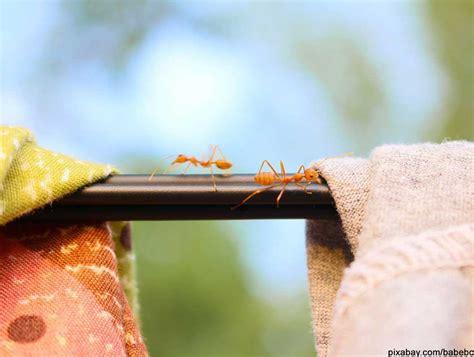 Gro E Ameisen Im Garten 4992 by Ameisen In Der Wohnung Ursachen Was Hilft Gegen Ameisen