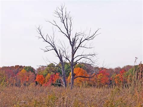 Dead Of Autumn dead trees in autumn field free stock photo