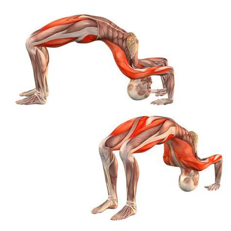 boat pose muscles used half wheel pose ardha chakrasana yoga poses yoga