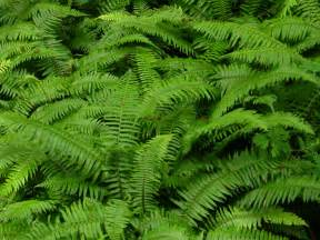 picking ferns and evergreen products for fast cash