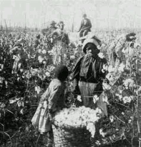 a black s journey from cotton picking to college professor lessons about race class and gender in america black studies and critical thinking books slaves picking cotton slavery photos