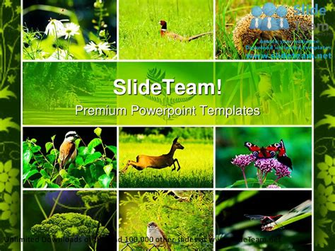 free download theme powerpoint nature wild nature animals powerpoint templates themes and