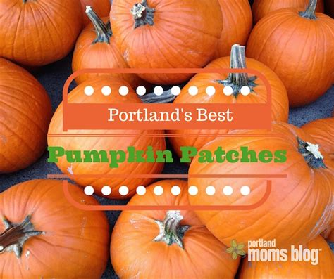 friendly pumpkin patch 14 family friendly pumpkin patches all portland