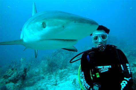 dive shark how safe is my scuba diving friend while diving