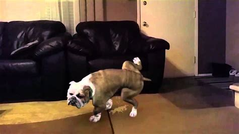 stop dog from peeing on couch bad dog peeing on a carpet youtube