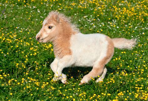 Pet Miniatur 8 miniature animals you can keep as pets miniature animals