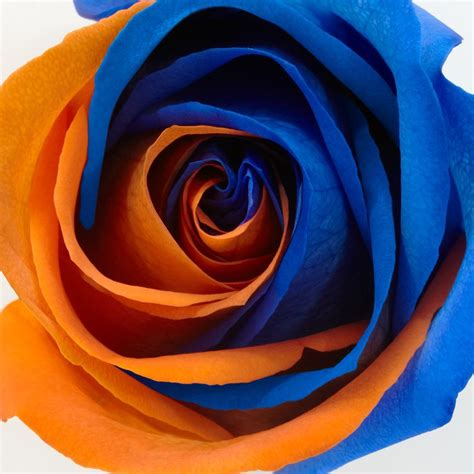 blue and orange 50 best all things orange and blue images on pinterest