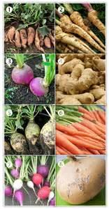 exles of root vegetables root vegetables 101 musings of a former