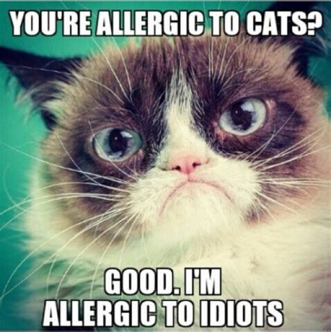 Cat Pics Meme - 35 funny grumpy cat memes quotes words sayings