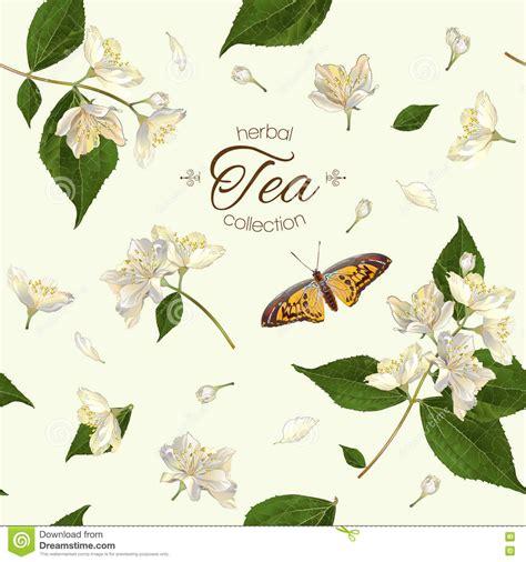 pattern for butterfly jasmine paper flower jasmine tea seamless pattern stock vector image 73580762