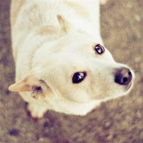 alimentazione per cani casalinga dieta casalinga per un in sovrappeso