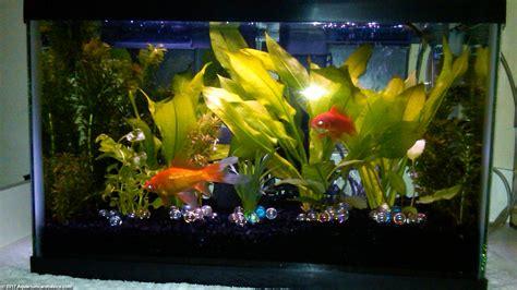 Set Golfish Kid 10 gallon aquarium dimensions size setup ideas kit tips