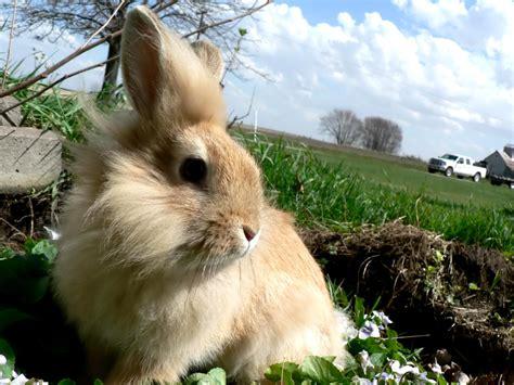 Kelinci Imut Lucu 20 wallpaper kelinci lucu dan imut