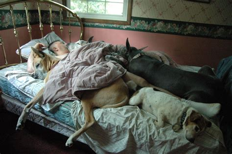 dogs in bed sleeping dogs photo contest winners fidose of reality