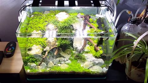 dennerle scapers tank  aquascape  wood  stones