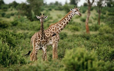 binatang  keren  lucu animal planet