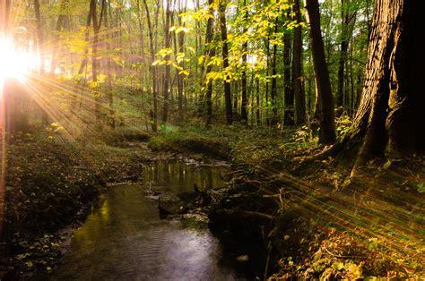 beautiful com forest landscape tree sunlight sunshine beautiful water