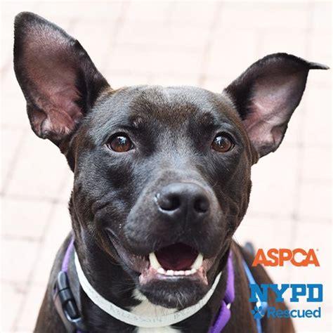 aspca adoptable dogs adoptable dogs aspca
