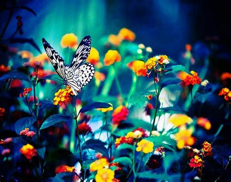 imagenes las flores flores familia feliz joven