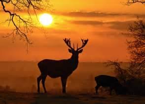 deer landscape deer landscape version deer