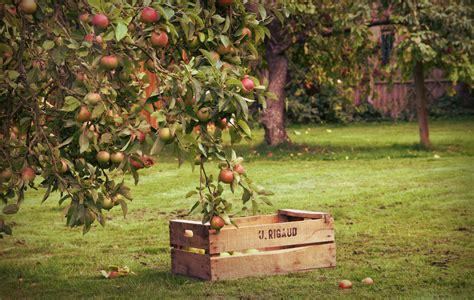 apple orchard appelboom oogsttijd moodboard tuin pinterest larder