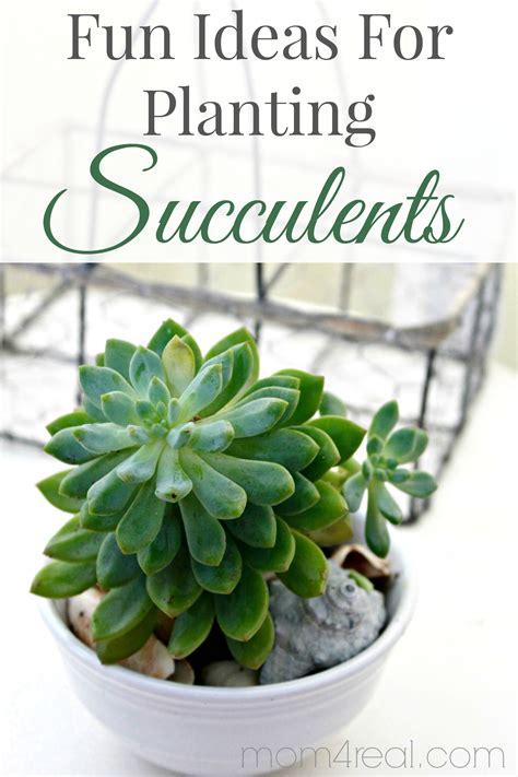 ideas  planting succulents  graphics fairy