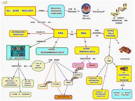la conservazione degli alimenti riassunto biologia 32 dna generalit 224 e struttura per una corret