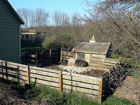 Backyard Pig Farming by 160 Best Images About Homesteading Goats And Sheep On