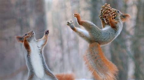 squirrel bowl bing wallpaper