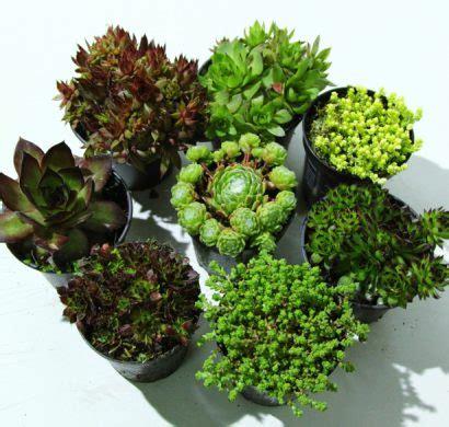 Les Plantes Succulentes by Plantes Succulentes Toutes Les Astuces Pour Bien Les