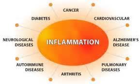 carnitina negli alimenti la carnitina abbassa i livelli infiammatori nei