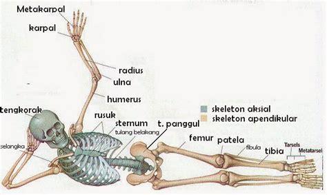 Gelang Fleksibel 6 penyusun tulang anggota badan kamuslog