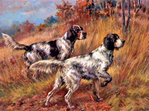 american setter dog american llewelyn setters on point by edmund h osthaus