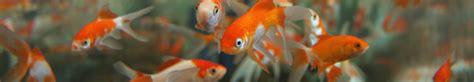 Nano Aquarium Pflanzen by Gt Ein Aquarium Ohne Pflanzen Ist M 246 Glich Tipps Tricks