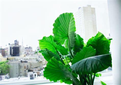 Schöne Pflegeleichte Zimmerpflanzen by Pflegeleichte Zimmerpflanzen 28 Dekoideen F 252 R Die
