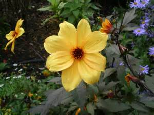 garden resources and trends fall blooming perennials