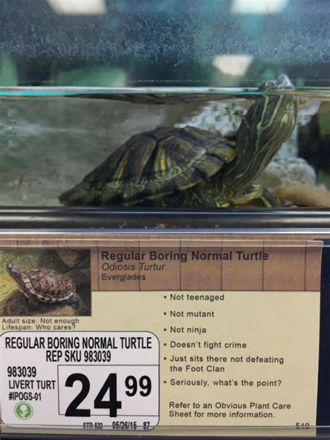 hilarious pet store descriptions  obvious plant neatorama