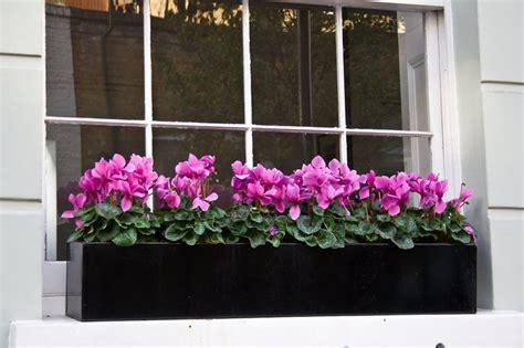 window box plants window boxes design installation maintenance