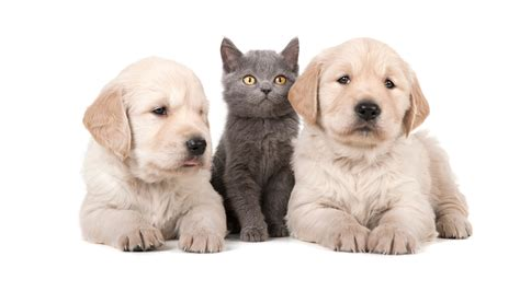puppy care puppy and kitten care allcare veterinary hospital of pacifica