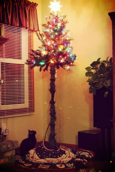 24 best cat proofing the tree images on trees tree and