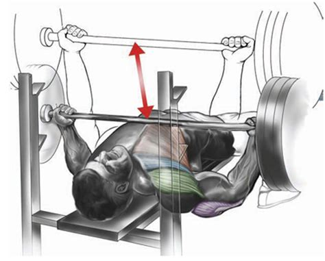 reverse grip incline bench press how to perform a reverse grip bench press back and bicep