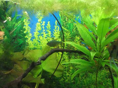 wallpaper aquarium background aquarium background a practical fishkeeping blog