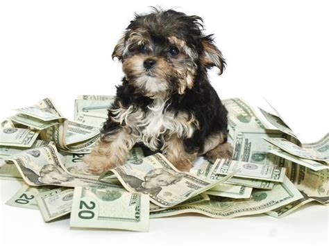 puppies cost this is how much it really costs to own a per year