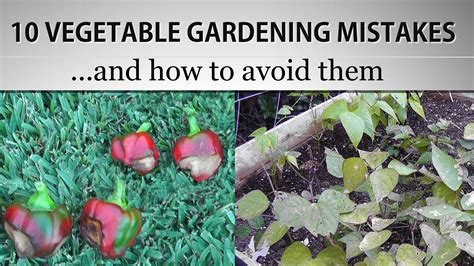The Most Common Vegetable Gardening Mistakes And How To Common Garden Vegetables
