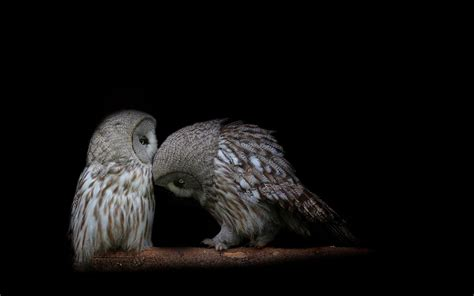 wallpaper android owl owl wallpapers wallpaper cave
