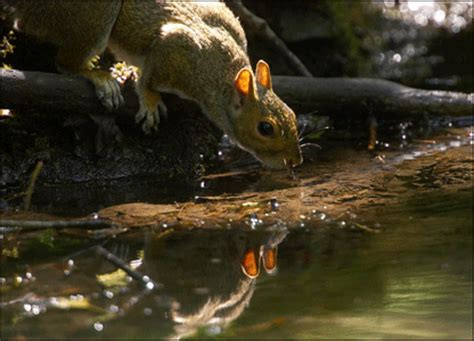 bbc news in pictures your pictures squirrels