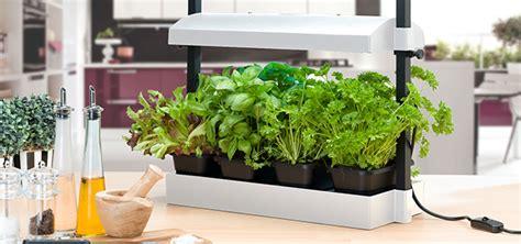 Countertop Garden by Grow Your Own Countertop Garden Homestead Gardens Inc