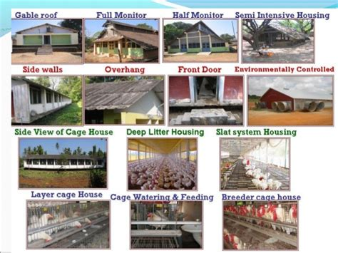 types of houses design of poultry houses